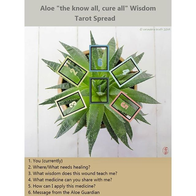 Tarot Spread: Aloe Wisdom~~~Tarot Deck: Crow Tarot @crowtarotOracle Deck: The Wild Offering#tarotreadersofinstagram #crowtarot #crowtarotdeck#tarotonline #taroista #tarotdeck #tarotreader #tarotcommunity #tarotjournaling #tarotcards #tarotspread #tarotofinstagram #tarotlover #tarotjournal #tarotcommunityofinstagram #oracledeck #oraclecommunity #oracle #oraclereader #oraclereader #oraclelove #wildofferingoracle #wildofferingsoracledeck #thewildofferingoracle #aloevera #aloevera #aloeveraplant #aloeplant #knowallcureall